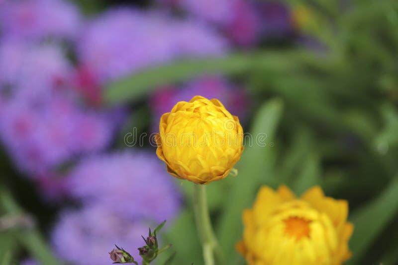 Bloem in de tuin stock afbeelding