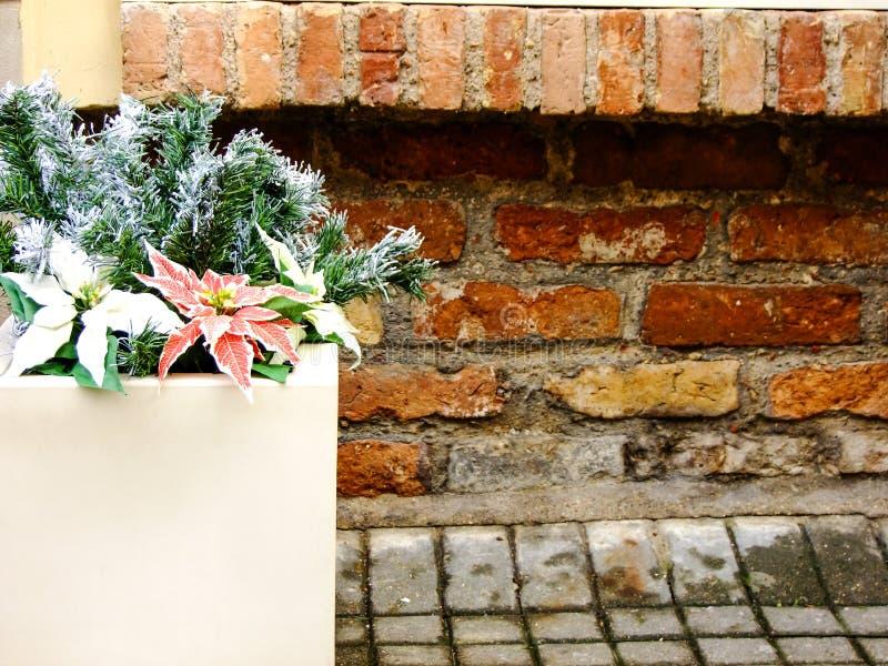 Bloem in de Vaas buiten stock foto