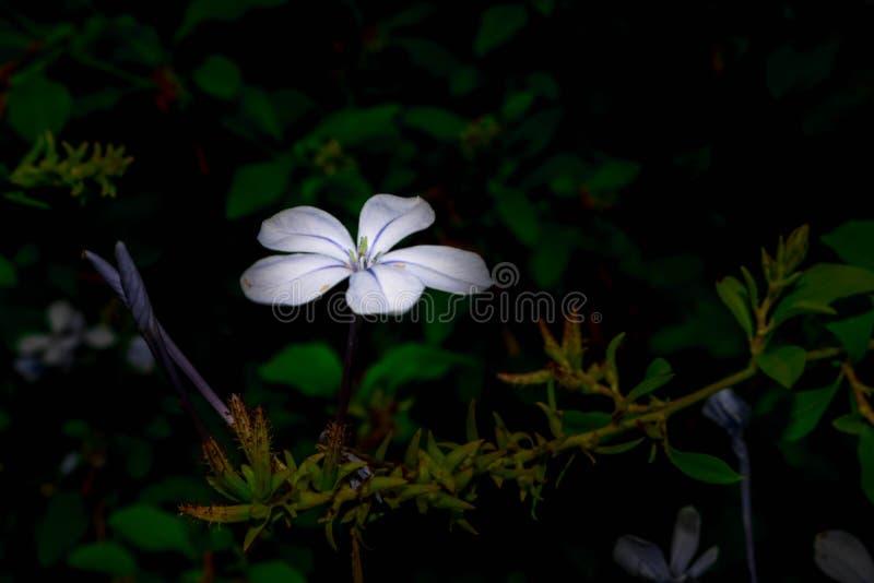 Bloem die met flits wordt verlicht stock afbeelding