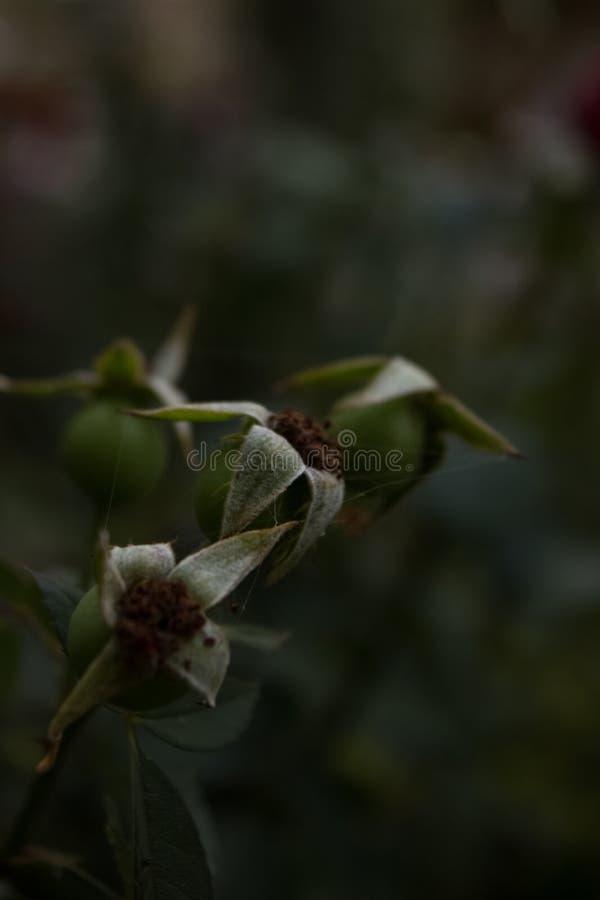 Bloem dode bloem Als achtergrond stock foto
