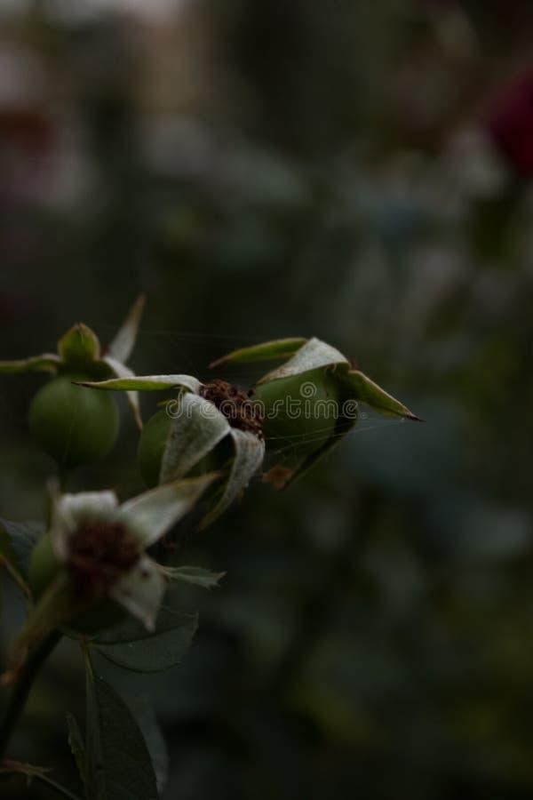 Bloem dode bloem Als achtergrond royalty-vrije stock foto