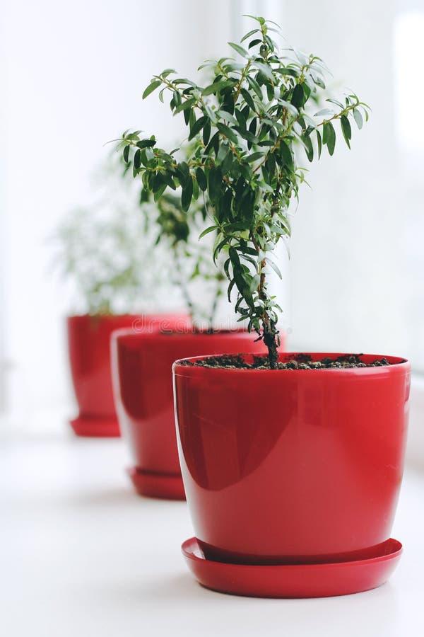 bloem in een rode pot stock foto