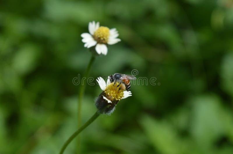 Bloem en bee3 stock foto's