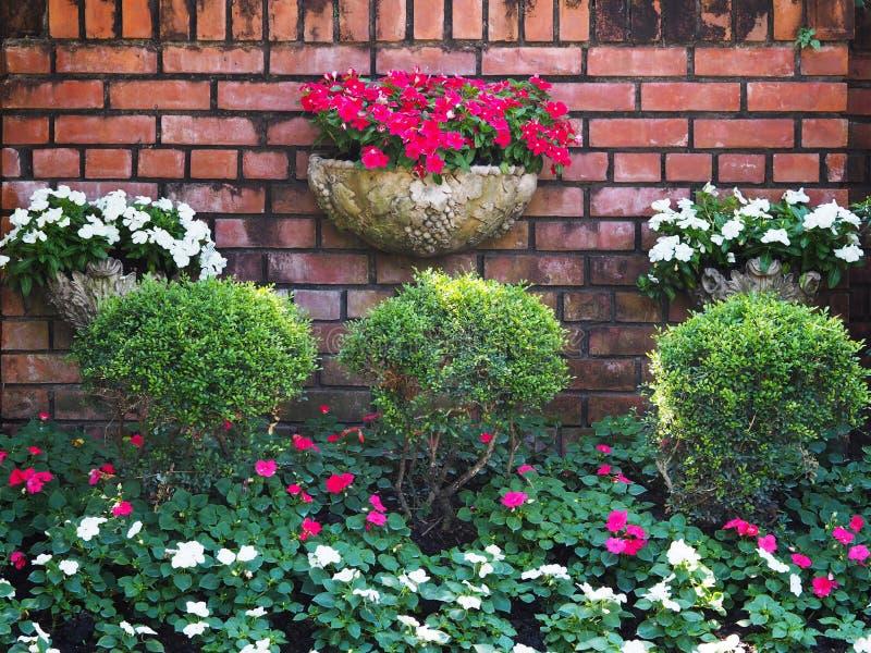 Bloem en boom het uitstekende verticale tuinieren op oude bakstenen muurachtergrond stock foto's