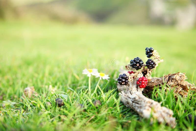 Bloem en fruit op de bovenkant van heuvelscène stock foto's