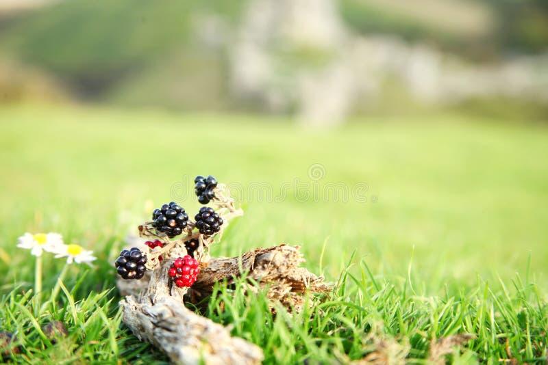 Bloem en fruit op de bovenkant van heuvelscène royalty-vrije stock fotografie