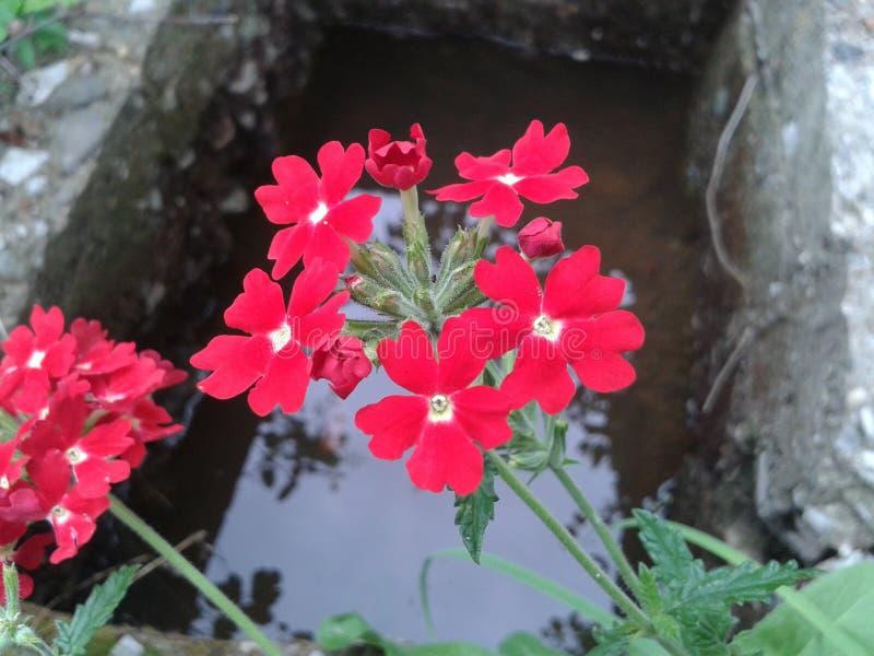 Bloem en water achter bos royalty-vrije stock afbeelding