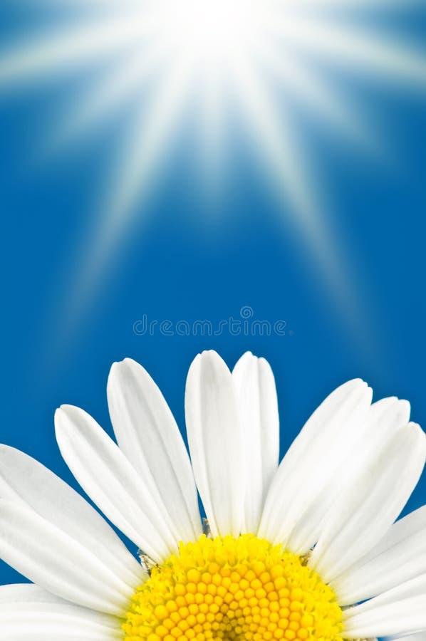 Bloem en zon stock afbeelding