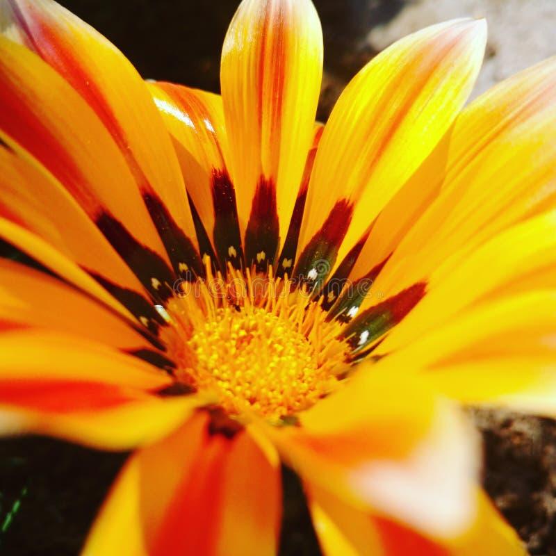 Bloem heldere geel Sluit omhoog Kleur pop aan u tuin stock foto's