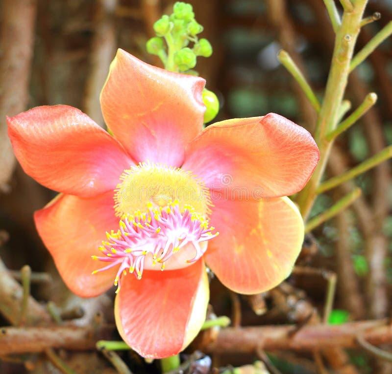 Bloem het bloeien stock foto's