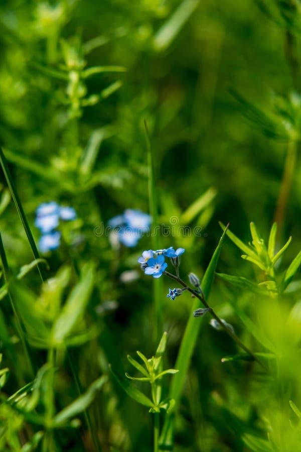 Bloem in het gras royalty-vrije stock fotografie