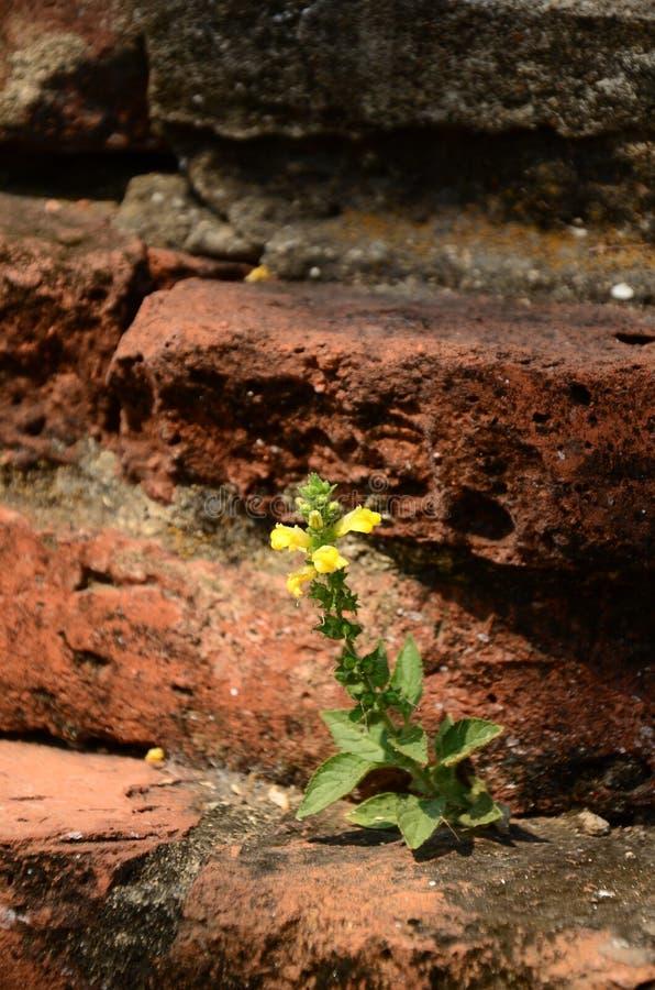 Bloem het groeien op baksteenvloer stock fotografie