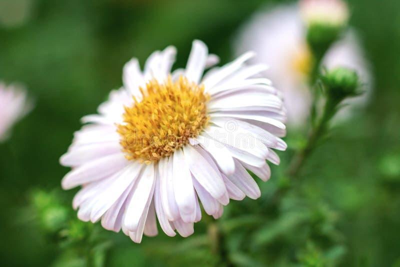 Bloem met wit bloemblaadjesclose-up tegen groene achtergrond stock afbeelding