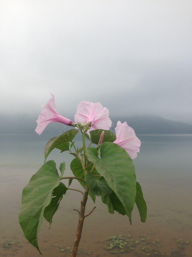 Bloem in mist op een oever van het meer stock afbeeldingen