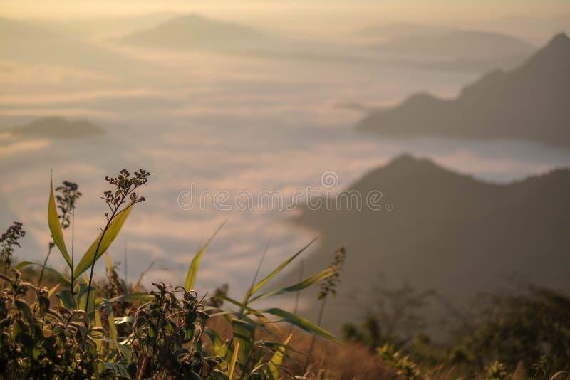 Bloem in ochtendzonsopgang met de mening van de onduidelijk beeld backgorund berg stock afbeeldingen