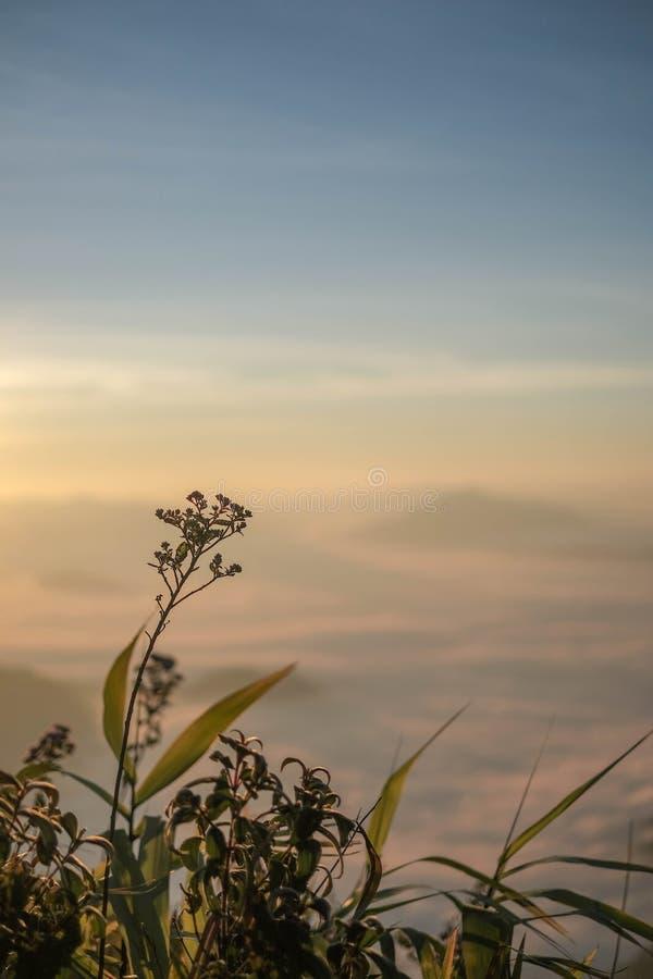 Bloem in ochtendzonsopgang met de meningsverticaal van de onduidelijk beeld backgorund berg stock afbeelding