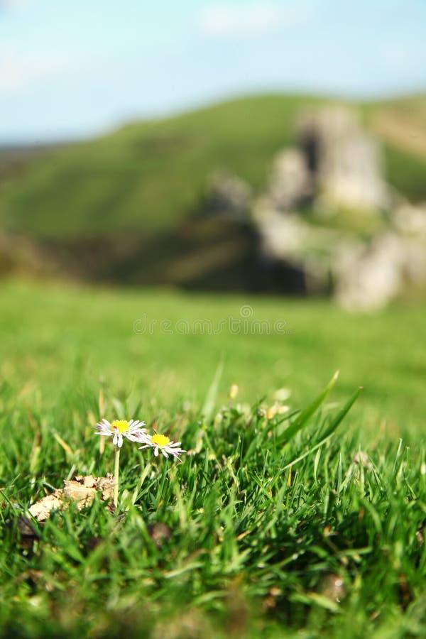 Bloem op de bovenkant van heuvelscène stock fotografie