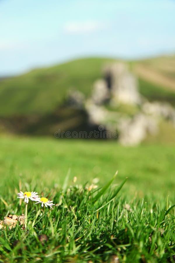 Bloem op de bovenkant van heuvelscène royalty-vrije stock afbeeldingen