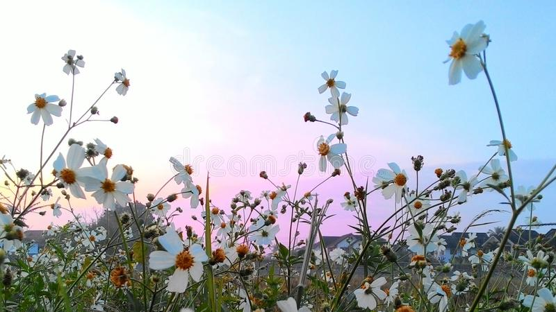 bloem op een weg stock foto's