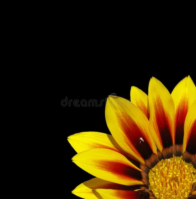 bloem op zwarte royalty-vrije stock foto