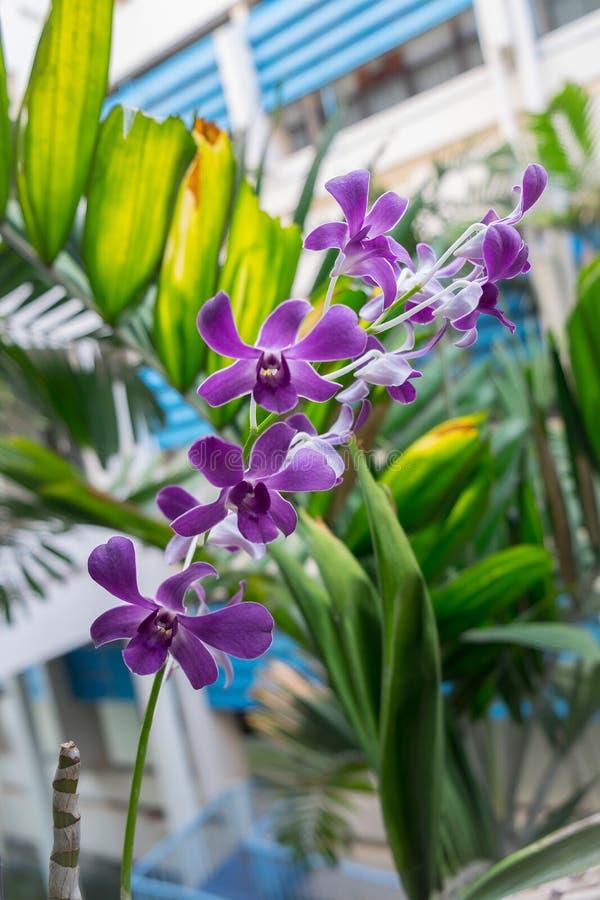 Bloem, orchidee stock afbeelding