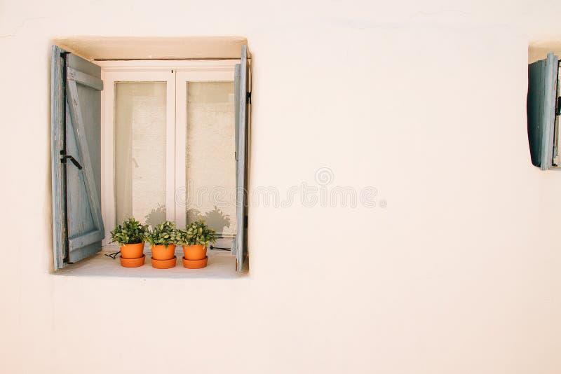 Bloem in potten op een Griekse stijlvensters stock fotografie