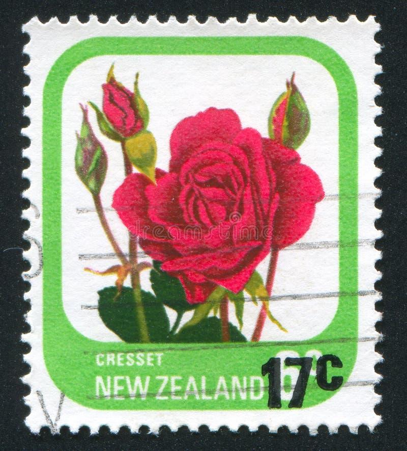 Bloem Rose Cresset stock afbeelding
