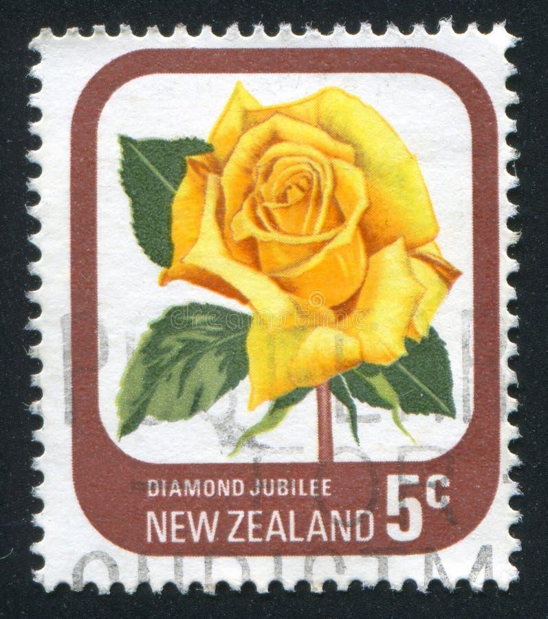 Bloem Rose Jubilee stock afbeeldingen