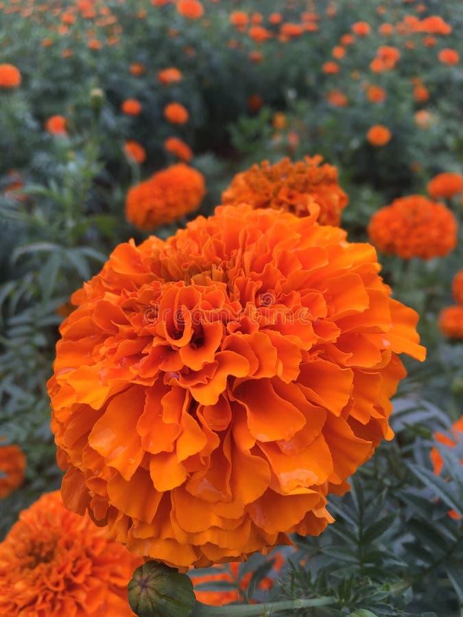 Bloem in sinaasappel stock afbeelding