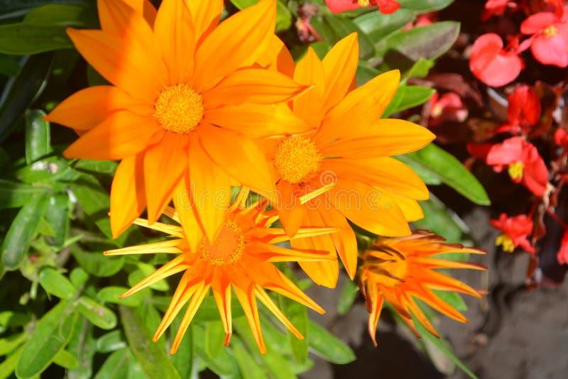 bloem, sinaasappel, bloemknop, knop, groene zonnebloem, de zomer, bloemen, bloemblaadje, flora, landbouw, macro, madeliefje, gewe stock foto