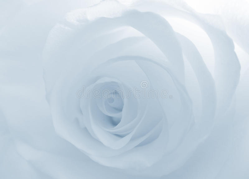 Bloem sofr witte nam blauw toe stock foto