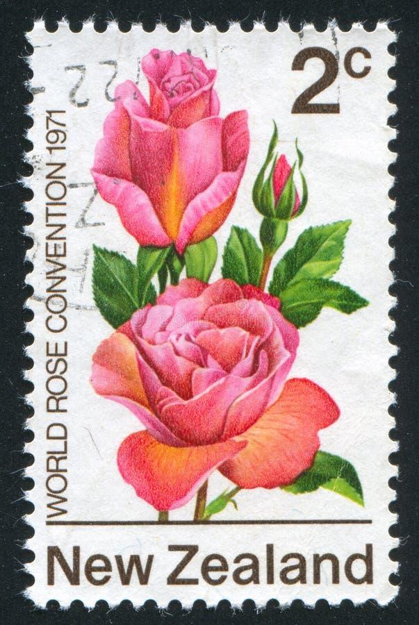 Bloem Tiffany Rose stock foto's