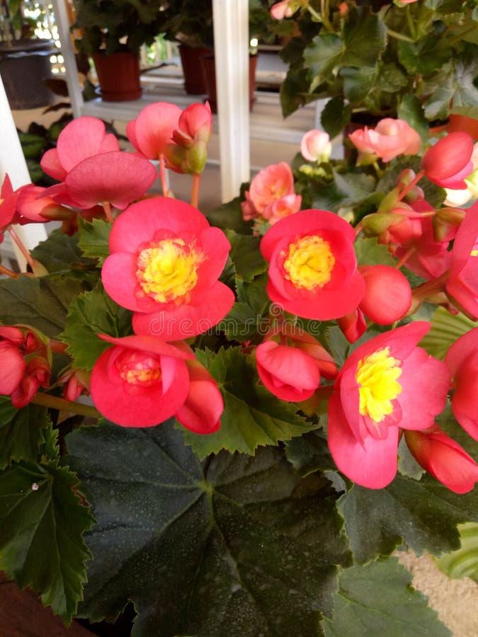 Bloem in tuin stock afbeeldingen