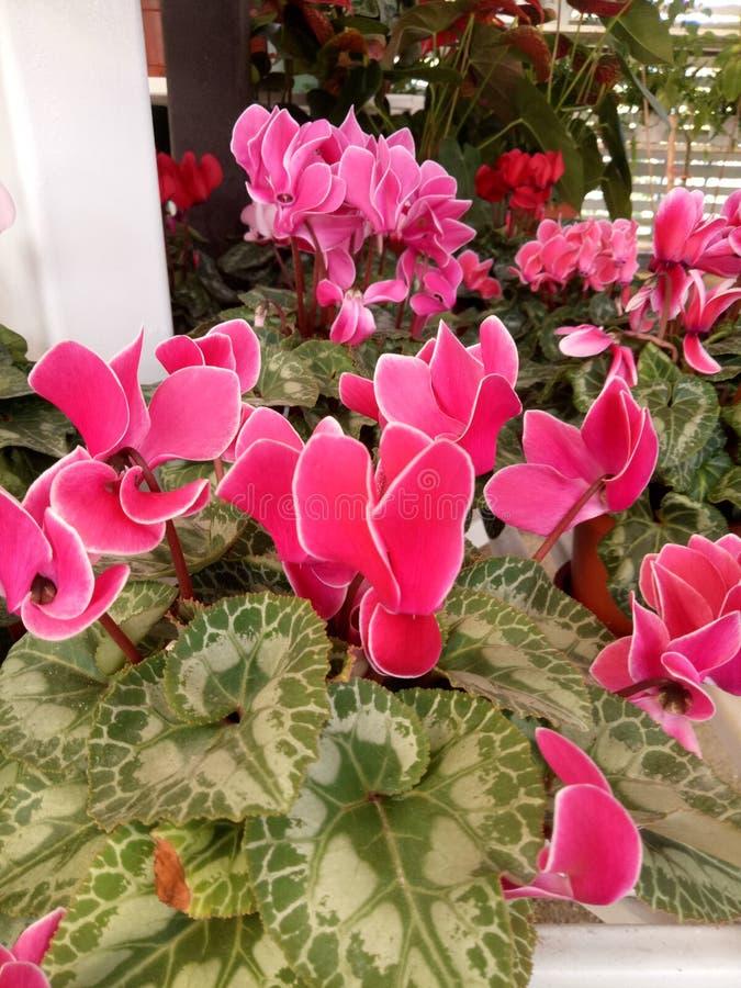 Bloem in tuin royalty-vrije stock afbeeldingen