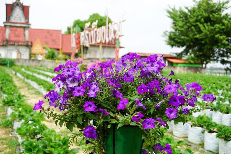 Bloem in tuin stock fotografie
