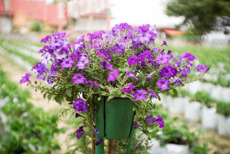 Bloem in tuin royalty-vrije stock afbeelding