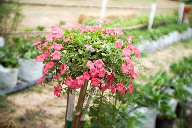 Bloem in tuin stock foto's