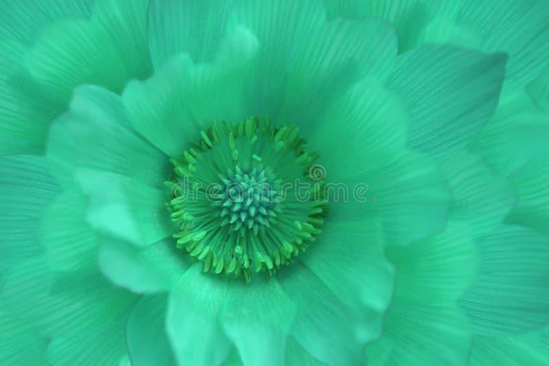Bloem turkooise sleutelbloem Macro Achtergrond van bloem Mening van hierboven Bloemenclose-up als achtergrond Voor ontwerp royalty-vrije stock fotografie