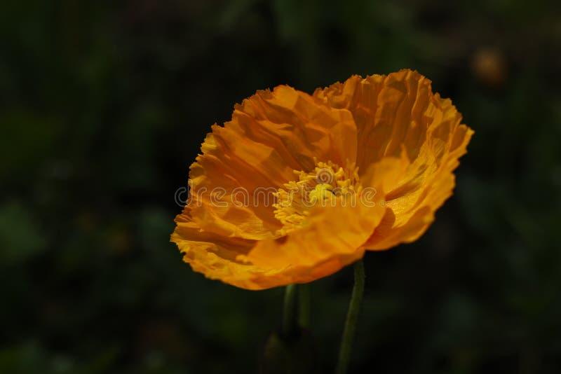 Bloem van aard, a-eigenschap van de bloem stock foto