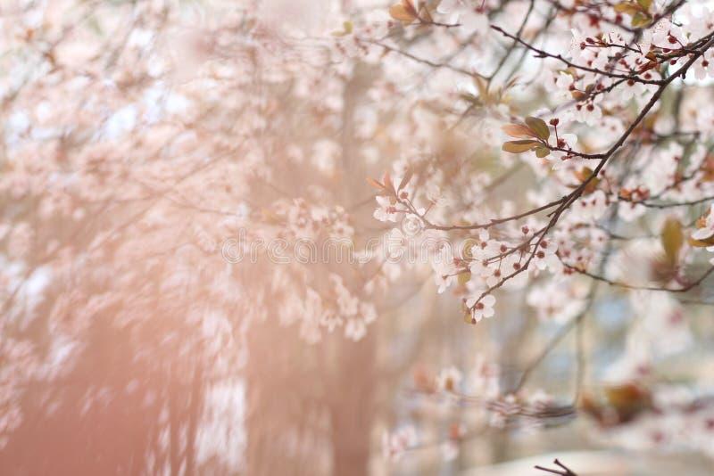Bloem van aard, a-eigenschap van de bloem stock foto's