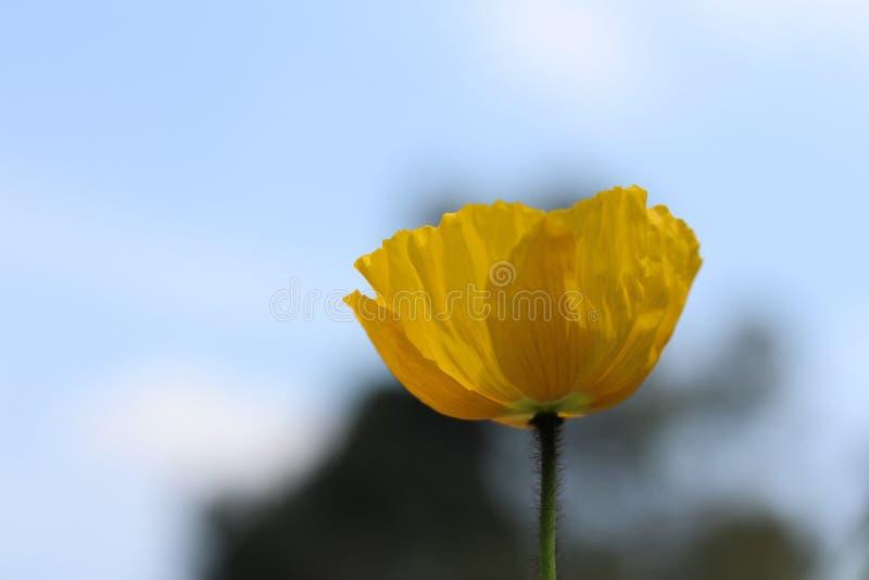 Bloem van aard, a-eigenschap van de bloem royalty-vrije stock afbeeldingen