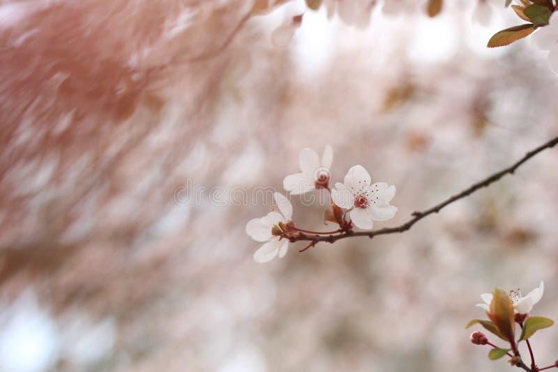 Bloem van aard, a-eigenschap van de bloem stock afbeelding