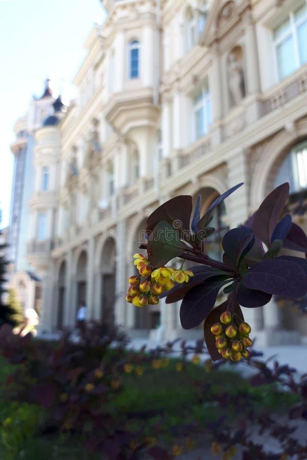 Bloem van berberis op de achtergrond van een mooie voorgevel van een oud gebouw in de stijl van de Provence royalty-vrije stock foto