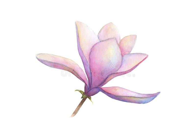 Bloem van de waterverf de mooie magnolia die op witte achtergrond wordt geïsoleerd De elegante botanische illustratie van de Wate vector illustratie