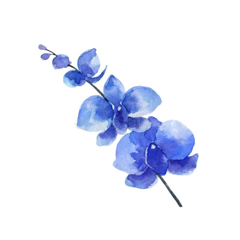 Bloem van de waterverf de vector blauwe die Orchidee op witte achtergrond wordt geïsoleerd stock illustratie