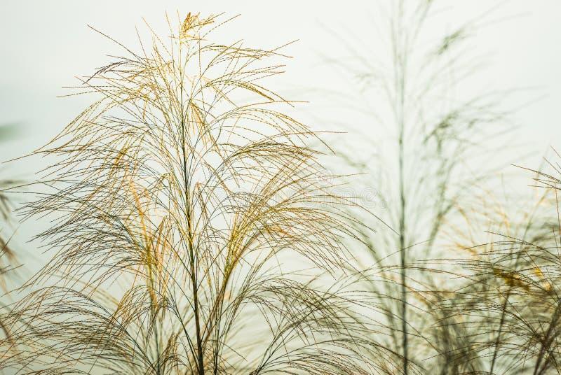Bloem van groen gras onder blauwe hemel royalty-vrije stock foto's