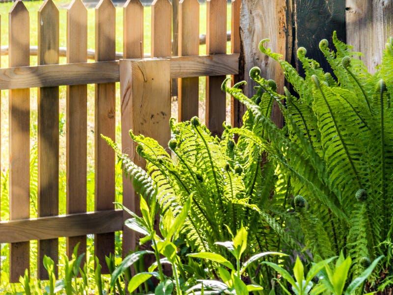Bloem van varen het groeien in de tuin stock foto