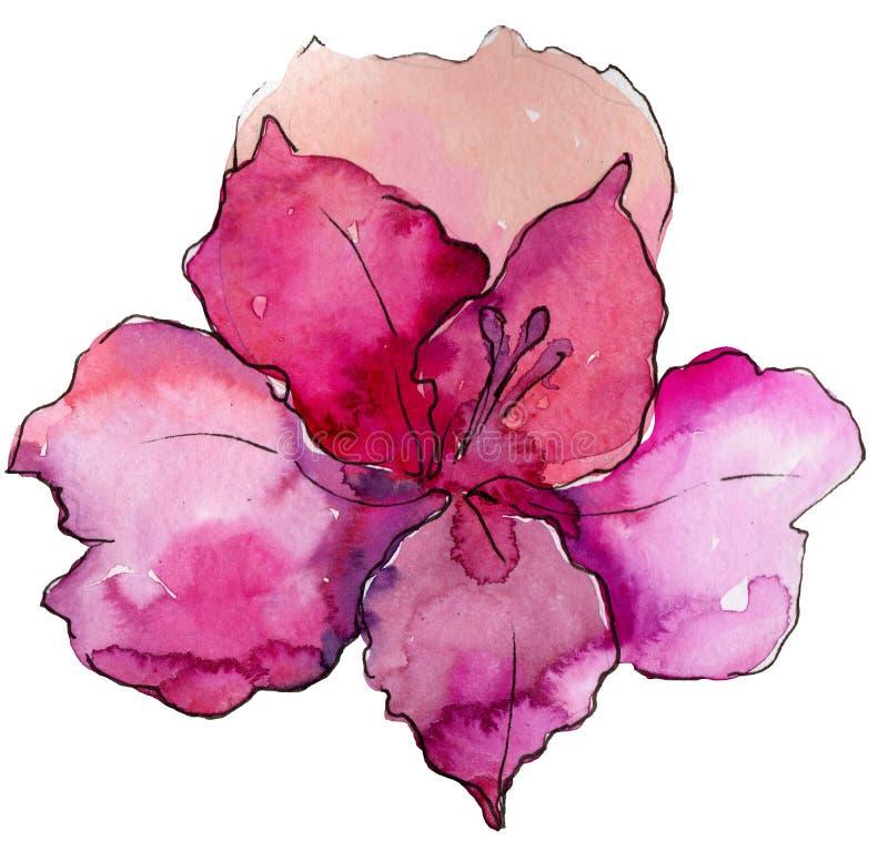 Bloem van waterverf de kleurrijke alstroemeria Bloemen botanische bloem Geïsoleerd illustratieelement stock illustratie