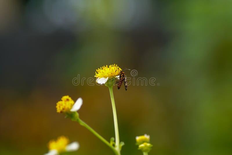 Bloem & vlindermacro royalty-vrije stock afbeeldingen