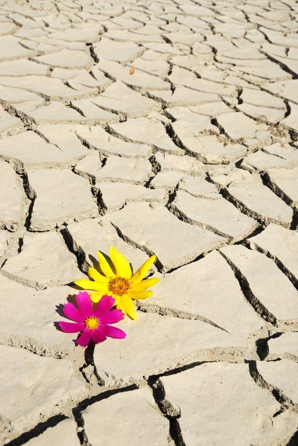 Bloem in woestijn stock foto's